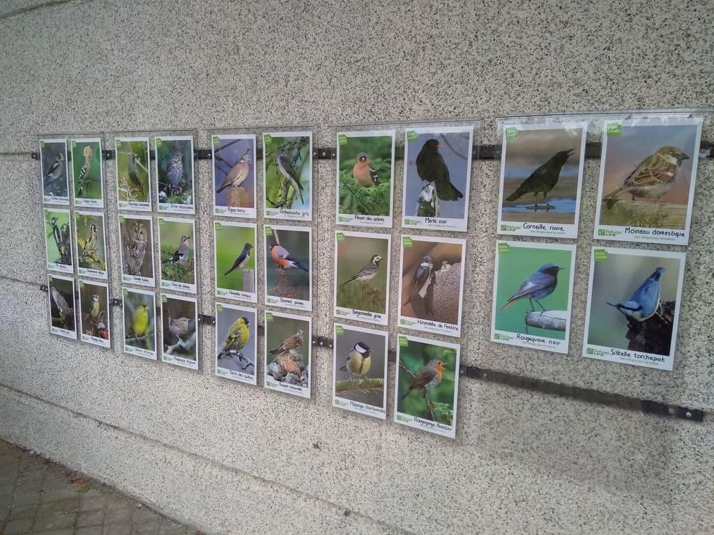 Le lycée refuge de la Ligue de Protection des Oiseaux et refuge biodiversité